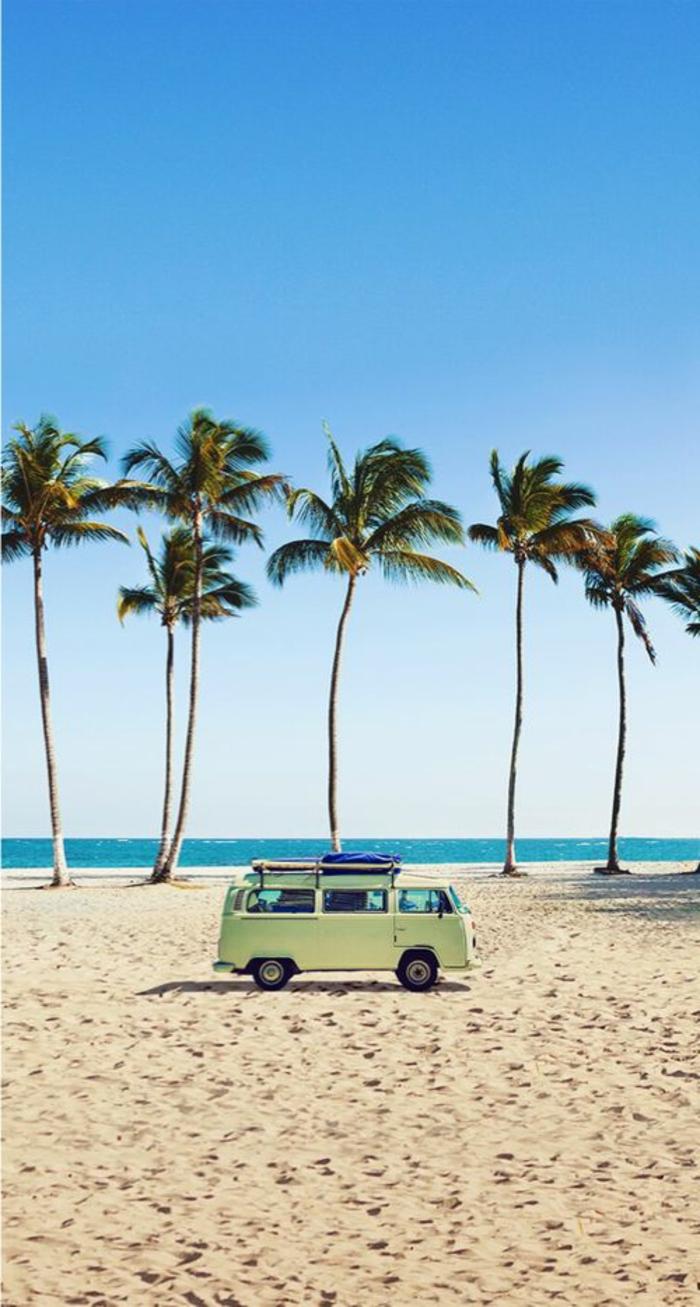 bilder-von-palmen-schöner-sand