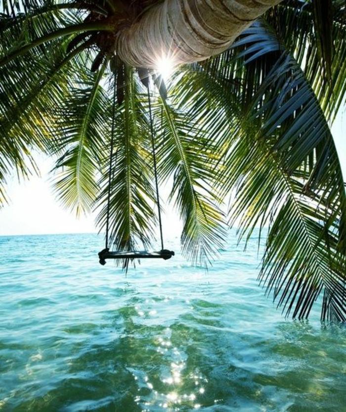 bilder-von-palmen-schaukel-über-dem-wasser
