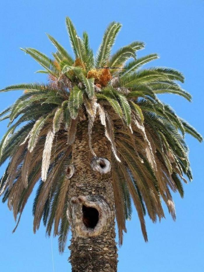 bilder-von-palmen-sehr-lustiges-gesicht