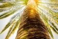 42 richtig einzigartige Bilder von Palmen!