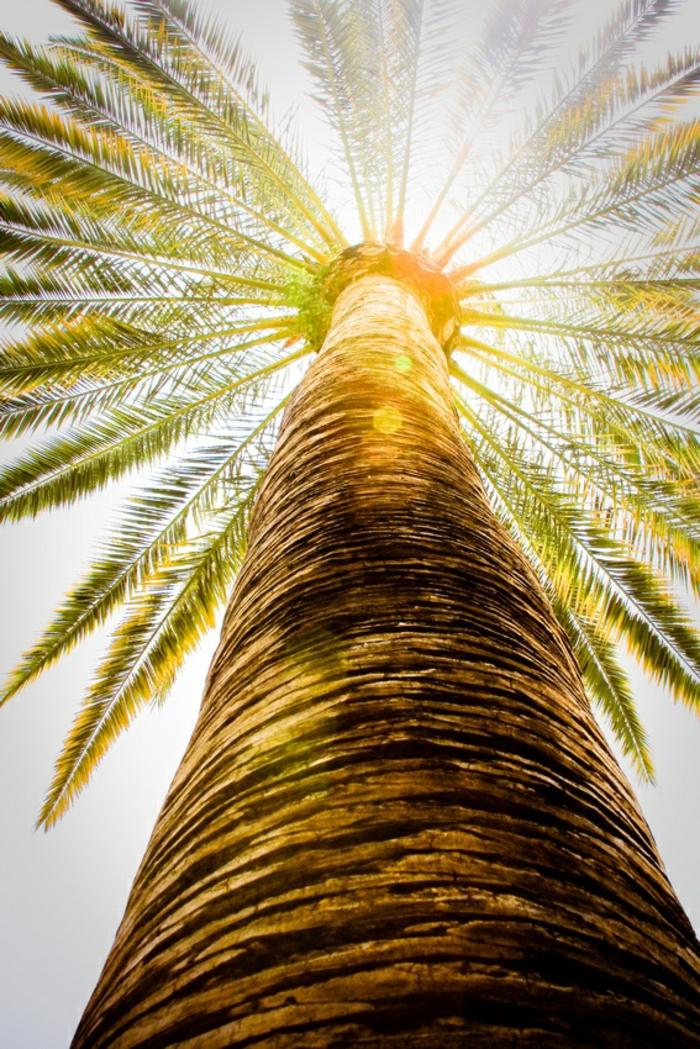 bilder-von-palmen-sehr-schöne-große-palme