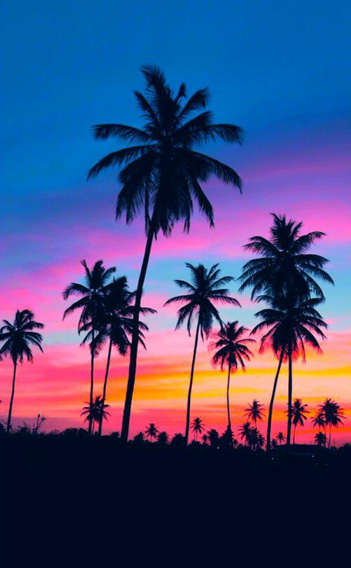 bilder-von-palmen-sehr-verschiedene-farben