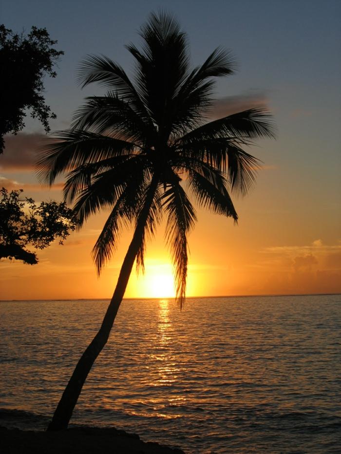 bilder-von-palmen-sonnenuntergang