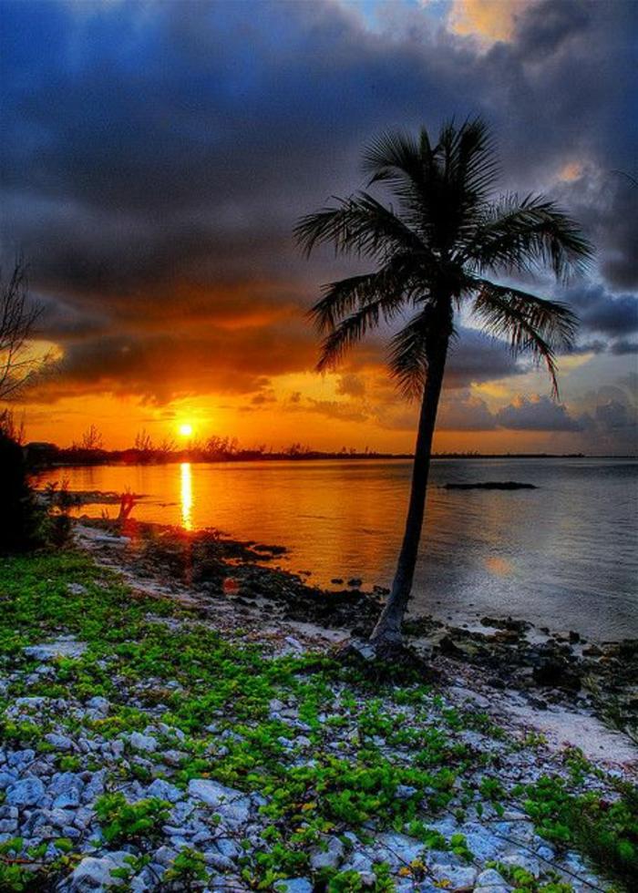 bilder-von-palmen-super-tolles-aussehen