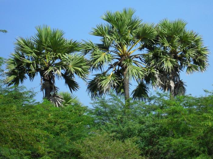 bilder-von-palmen-viele-grüne-pflanzen