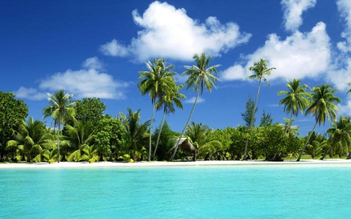 bilder-von-palmen-wolken-über-dem-wasser