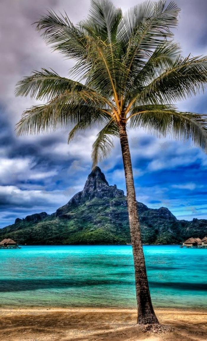 bilder-von-palmen-wunderschöne-farben