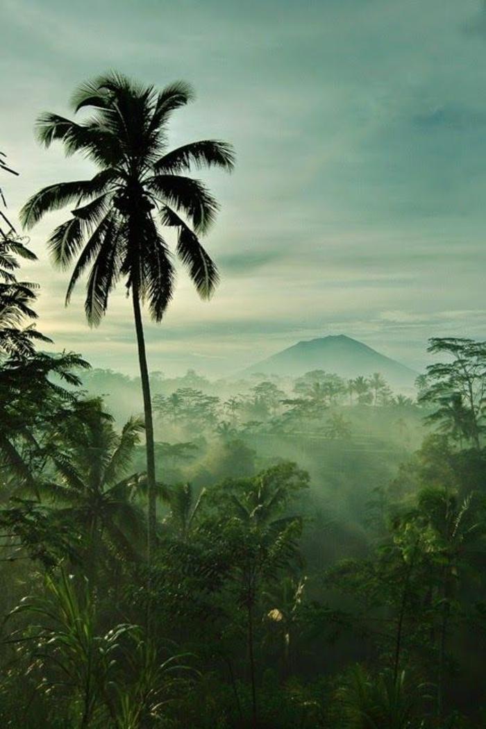 bilder-von-palmen-wunderschönes-aussehen