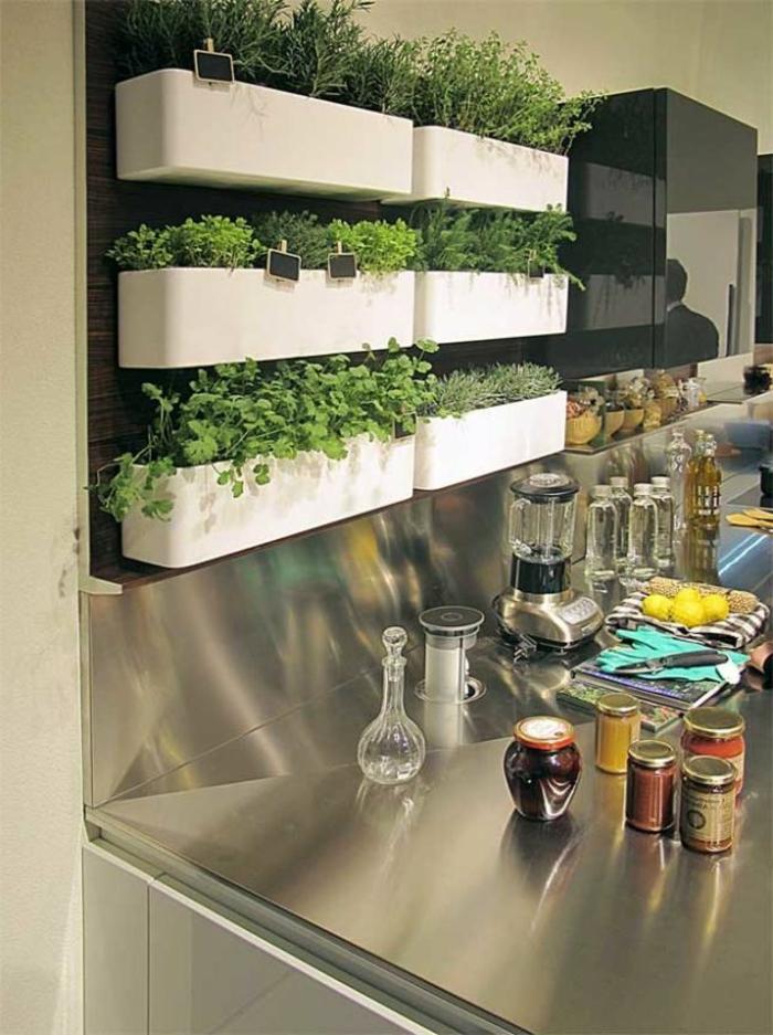 grüne-wandfarbe-küche-mit-pflanzen-an-der-wand