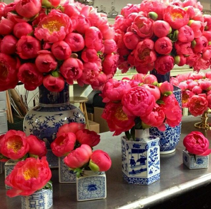 coral peonies wallpapers high - photo #12