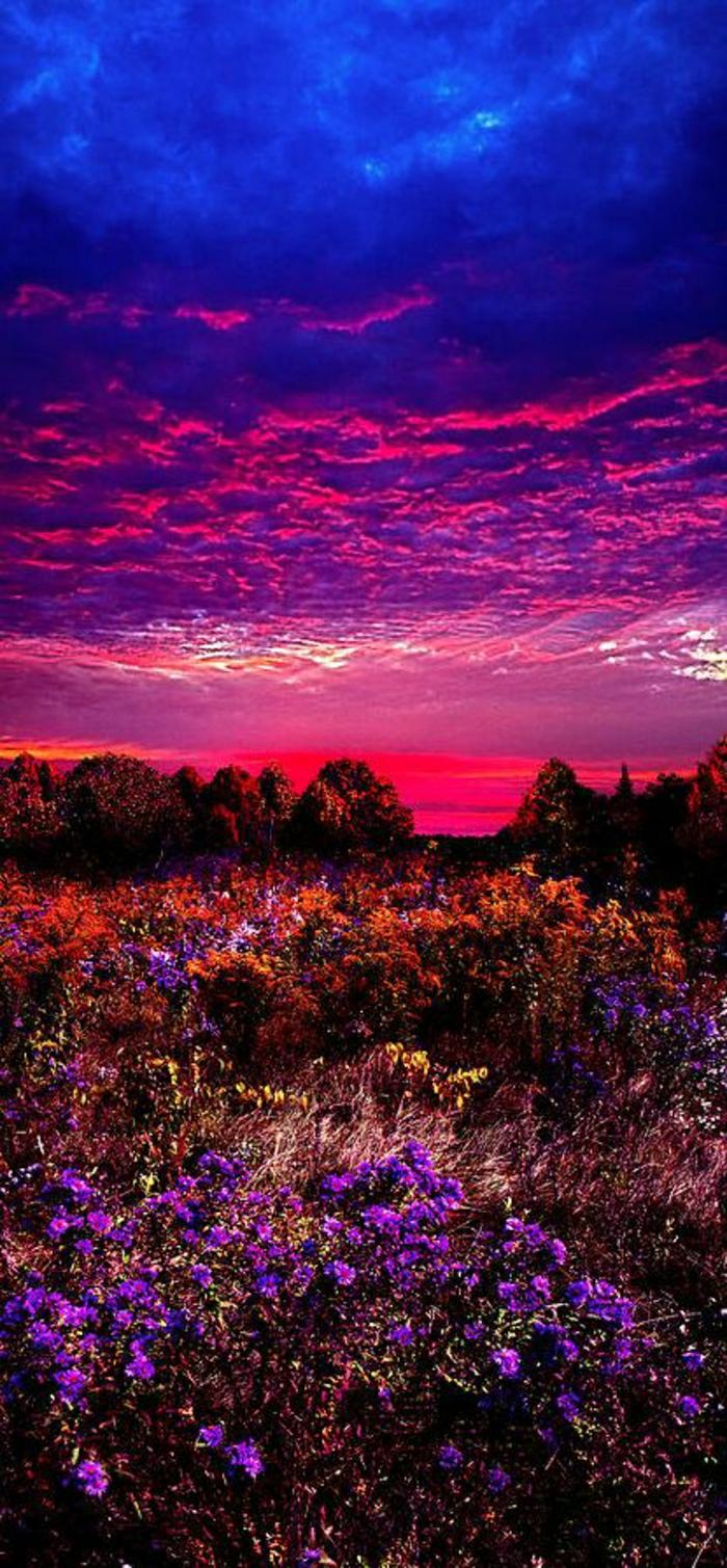 Sonnenuntergang-Foto-schön-romantisch-grelle-Farben-Blumen-Feld