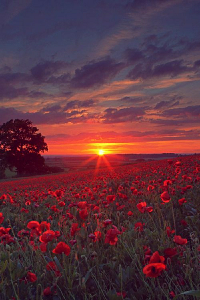 Sonnenuntergang-Bilder-Oxfordshire-England-Blumen