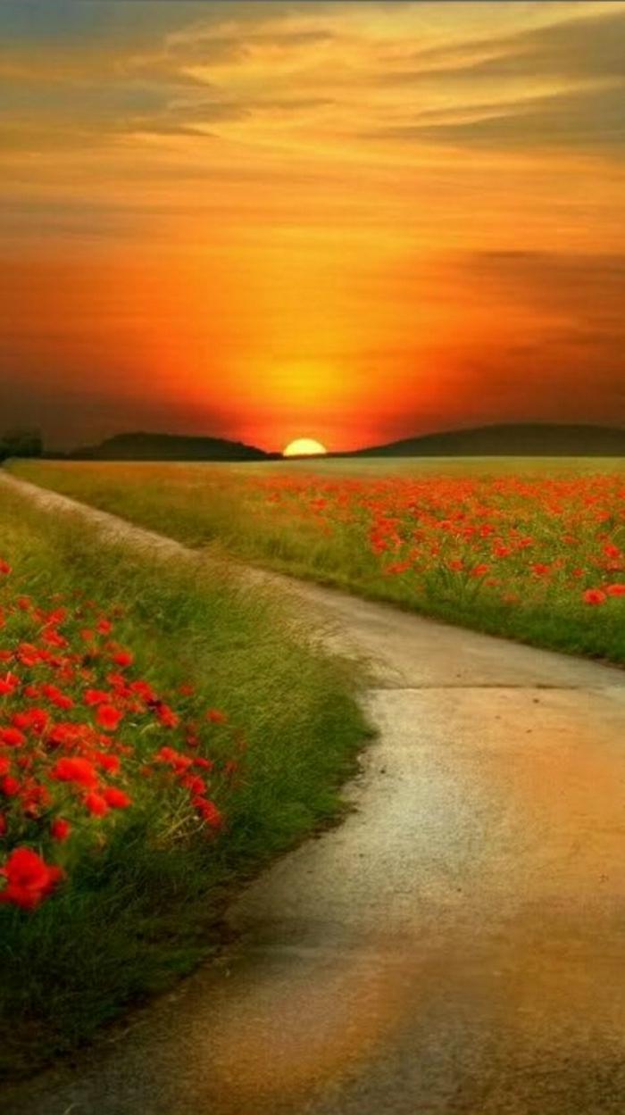 Sonnenuntergang-Foto-Serene-Blumen