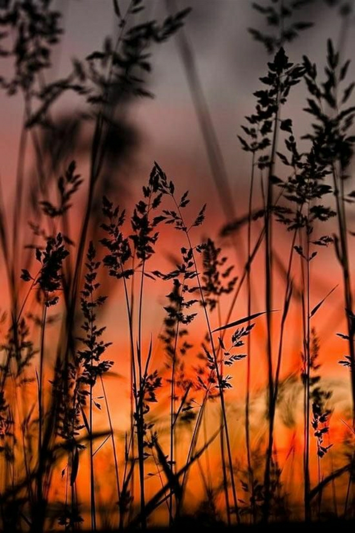 Sonnenuntergang-Gras-Schatten-nostalgisch