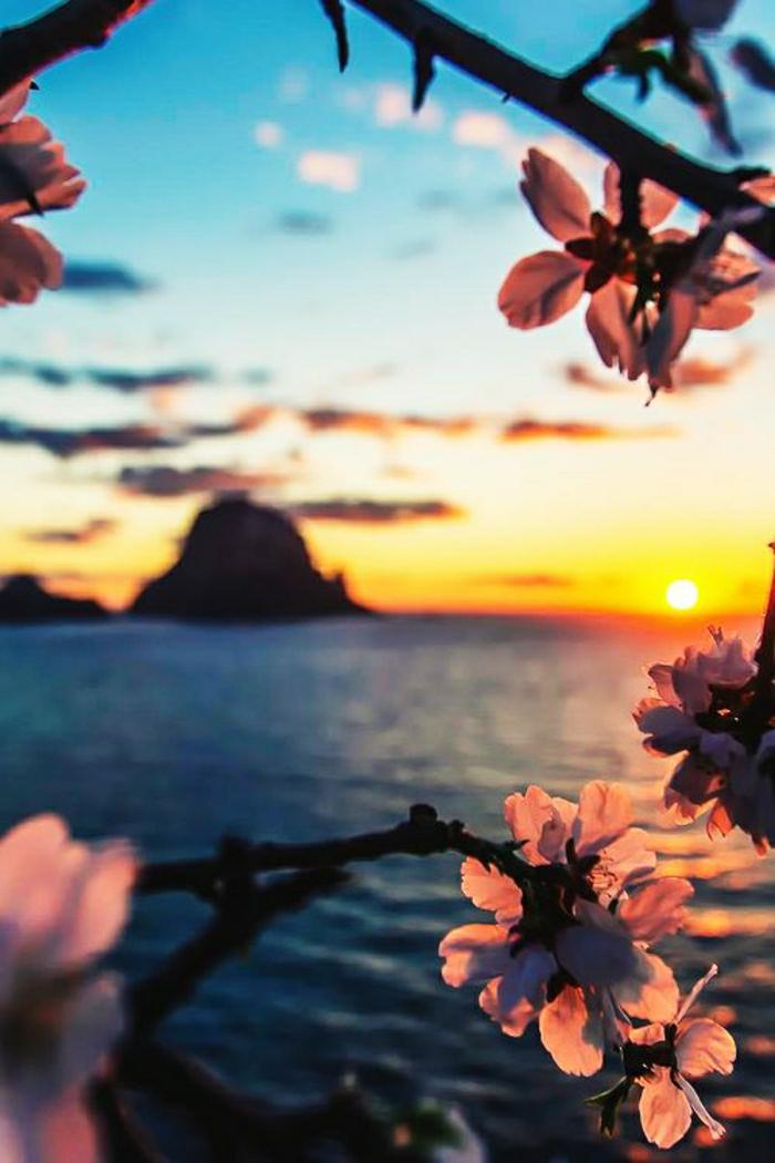 Sonnenuntergang-Ibiza-Meer-Mandelblüten
