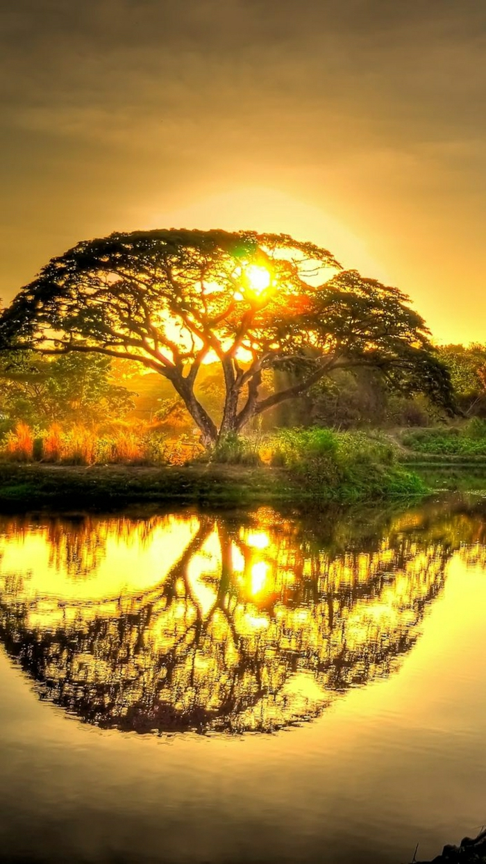 Sonnenuntergang-Natur-Grün-Baum-Schatten-See