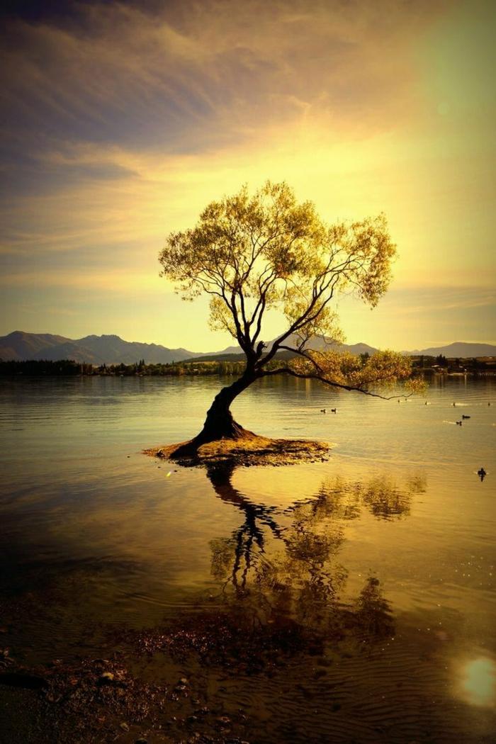 Sonnenuntergang-See-einziger-einsamer-Baum-Enten
