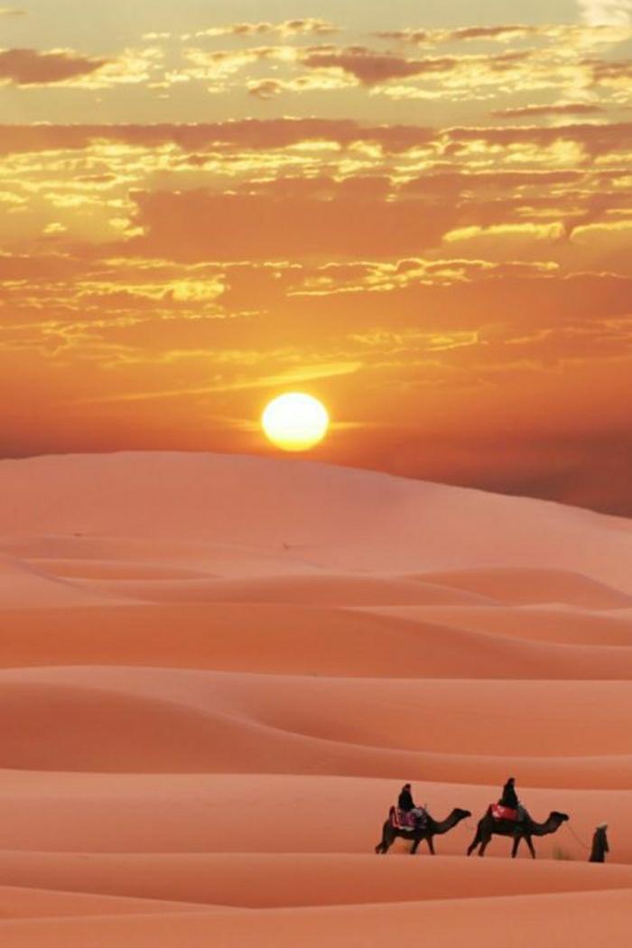 Sonnenuntergang-Wüste-Sand-orange-Kamele