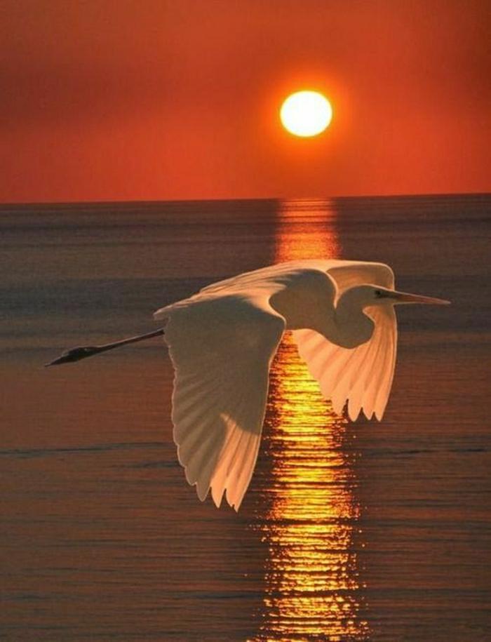 Sonnenuntergang-Wasser-Egret-Flug