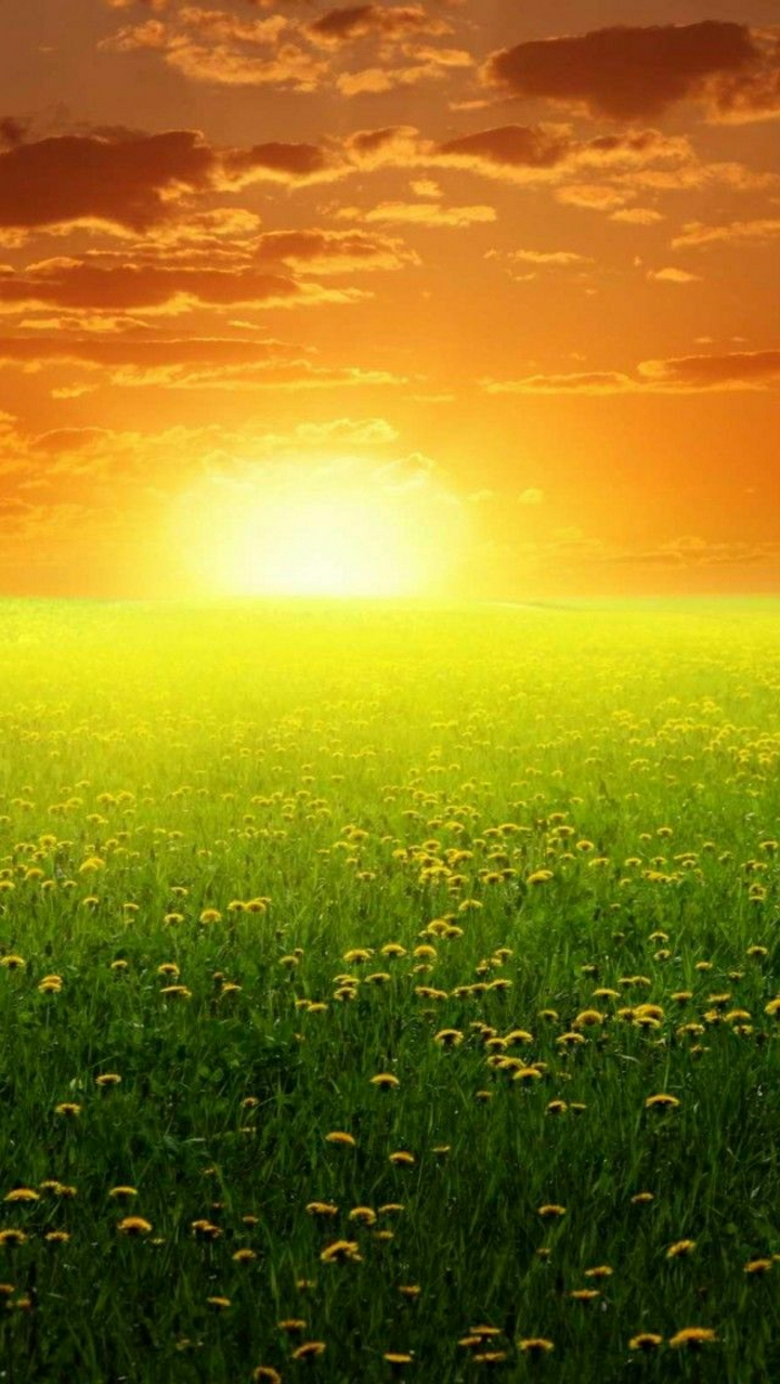 Sonnenuntergang-hell-schön-Gras-Löwenzähne