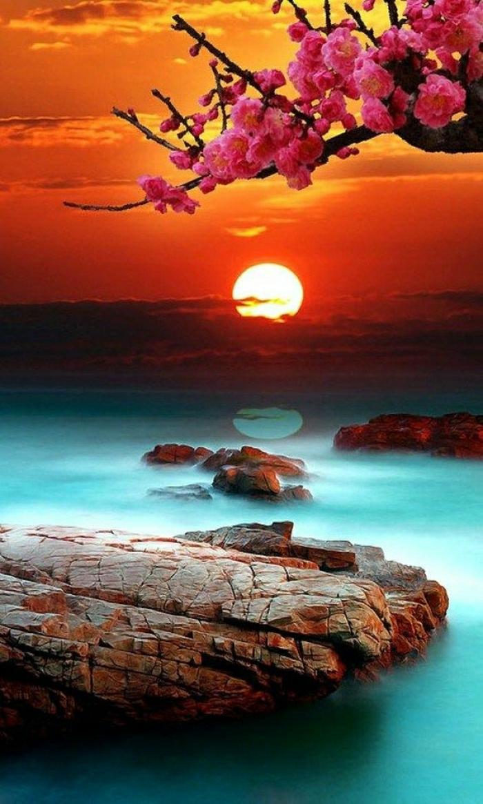 Wasser-Baum-Blüte-Sonnenuntergang-exotisch