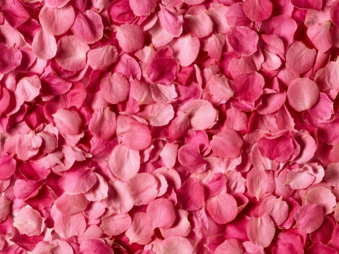bulgarische-rose-foto-von-oben-gemacht
