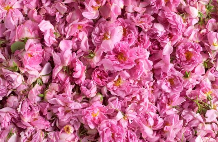 bulgarische-rose-foto-von-oben-genommen