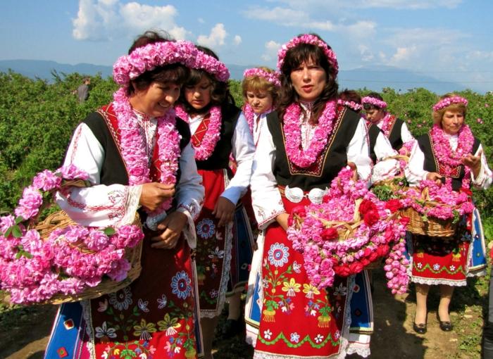 bulgarische-rose-interessant-und-cool