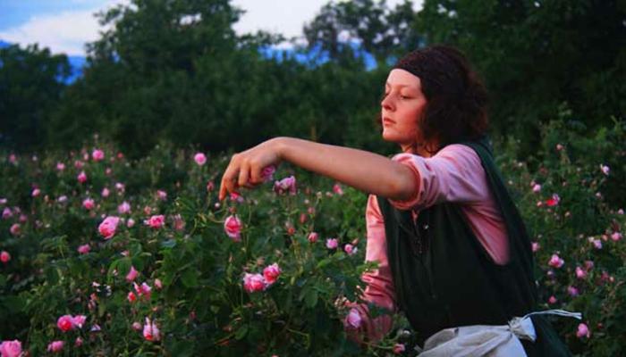 bulgarische-rose-interessantes-bild