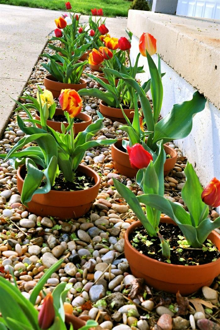 keramische-Blumentöpfe-Tulpen-dekorative-Steine-Hof-Garten