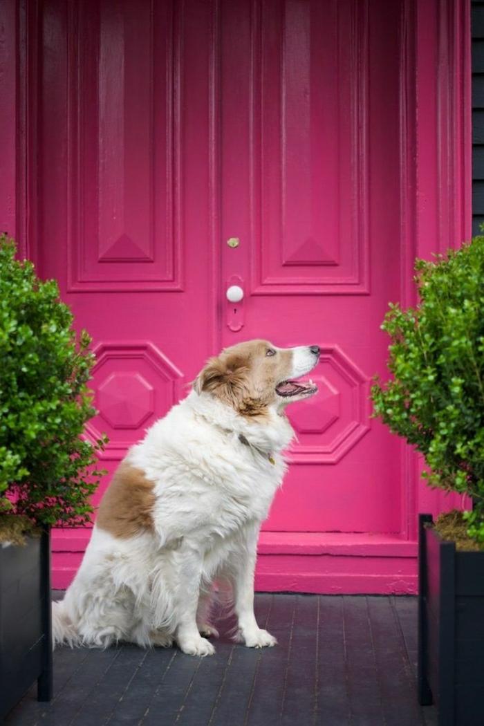 rosa-gefarbene-160-jährige-viktorianische-Haustür-vintage-retro-Hund-Blumentopf