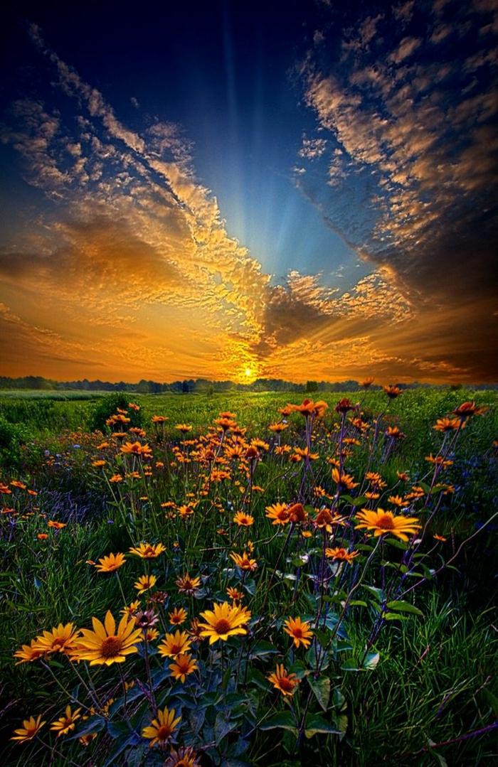 schöne-Sonnenuntergang-Bilder-Himmel-Gras-Gänseblumen