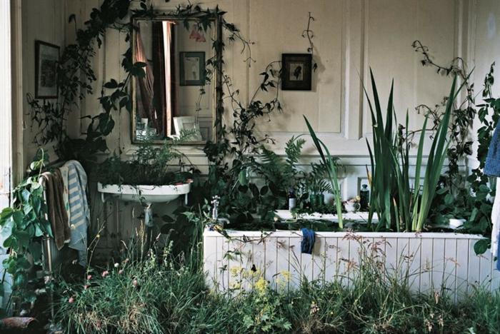 shabby-chic-bilder-grüne-pflanzen