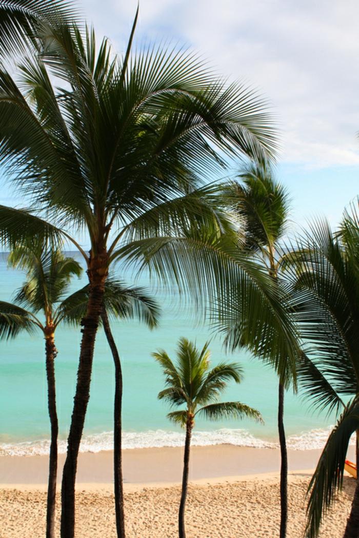 sonne-und-strand-große-palmen