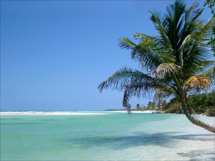 sonne-und-strand-sehr-interessante-grüne-Palme