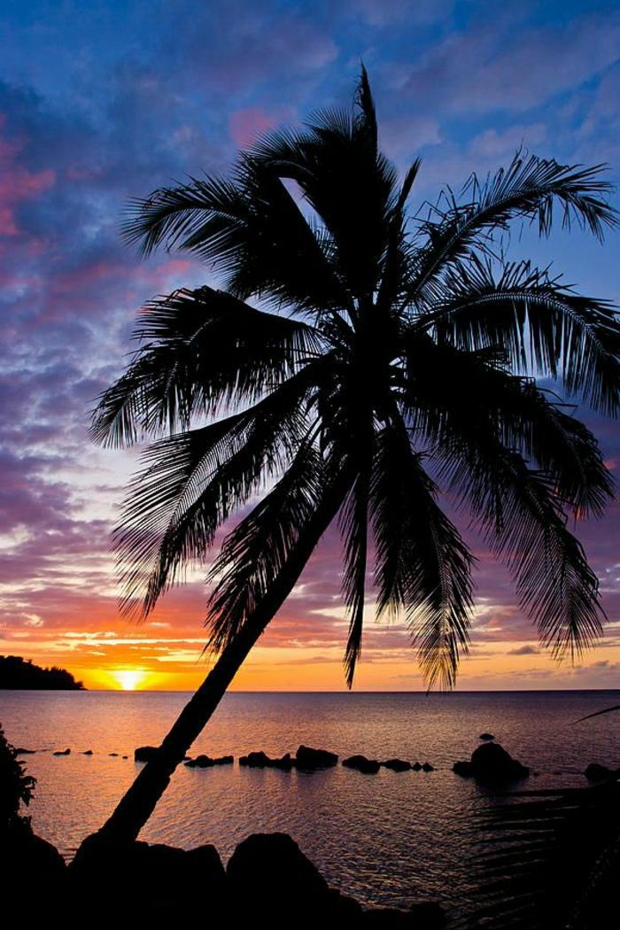 Anini-Beach-Kauai-Hawaii-Palmen-Sonnenuntergang