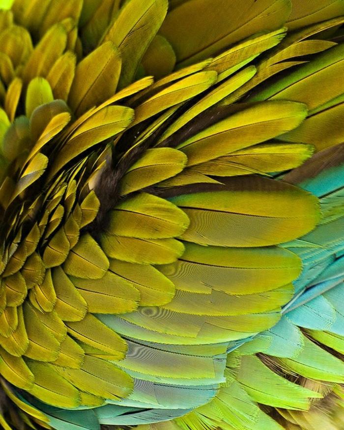 Ara-bunte-Federn-golden-türkis-faszinierende-Nuancen