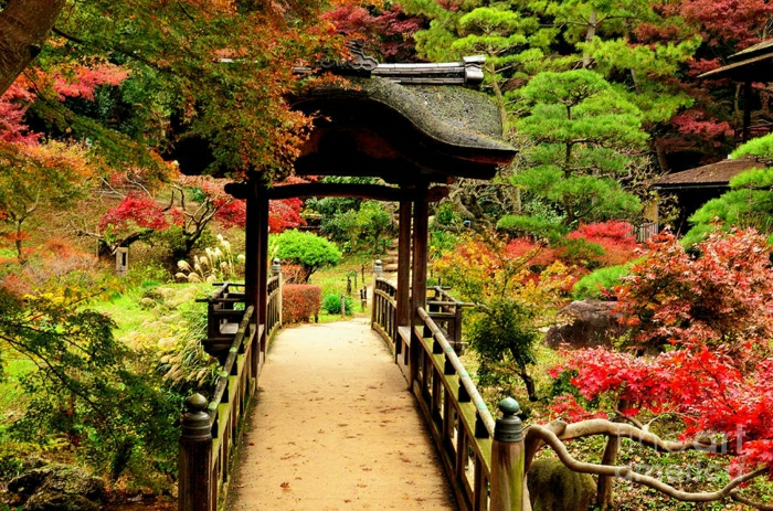 Garten-Brücke-japanisch-exotisch