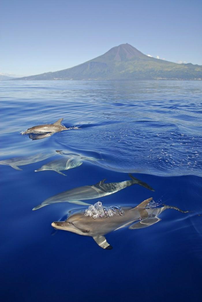 Hawaii-Inseln-Delfine-schwimmen-Attraktion-Urlaub