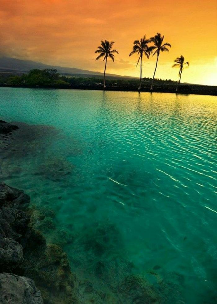 Hawaii-Inseln-Strand-exotisch-Palmen-Ozean