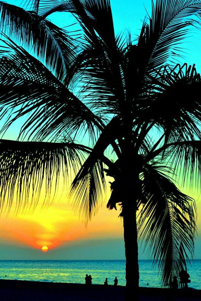 Hawaii-Sonnenuntergang-Palmen-exotisch
