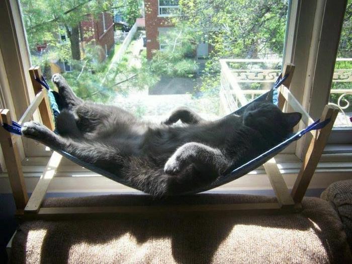 Die Hangematte Fur Katzen Ist Ein Absoluter Hit Archzine Net