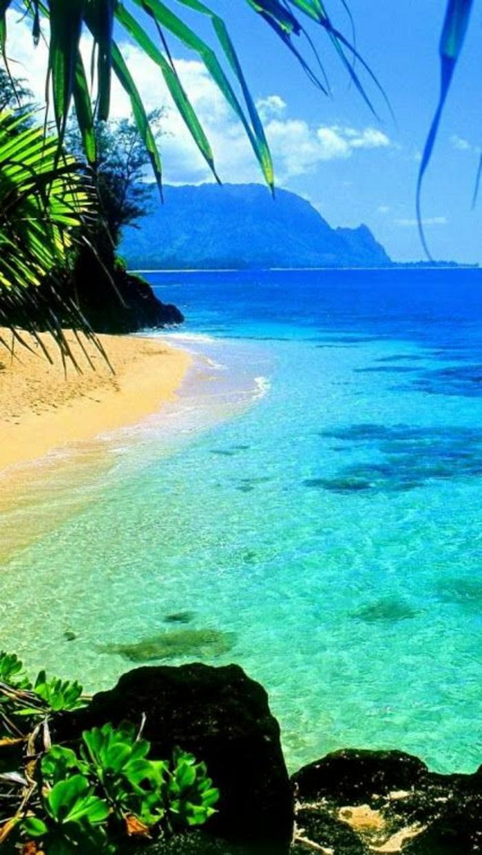 Kawaii-Insel-Hawaii-Strand-Ozean-Palmen-exotisch