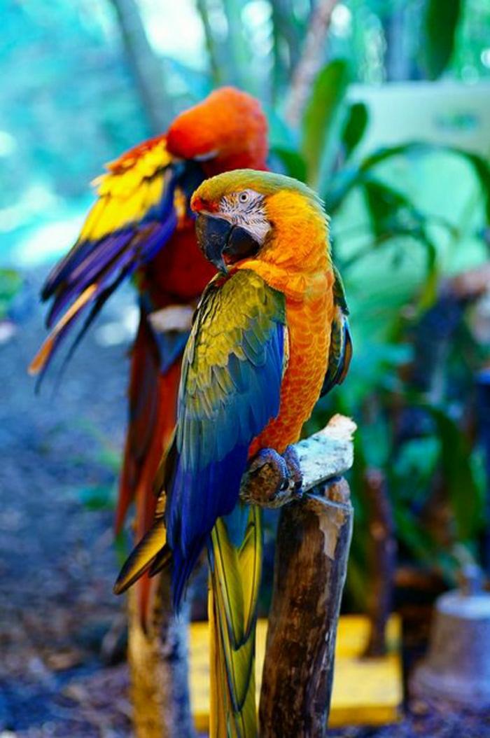 Papagei-bunte-Federn-gelb-orange-blau-grün-rot