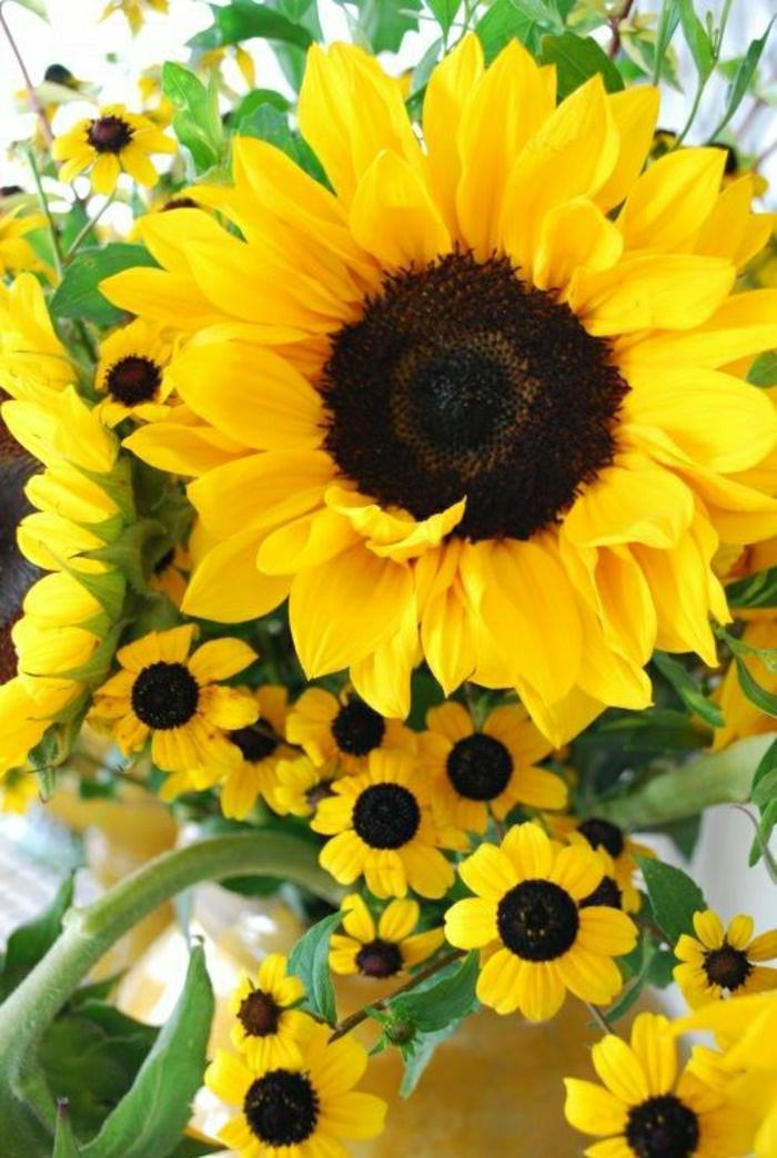Strauß-Sonnenblumen-Foto-frisch