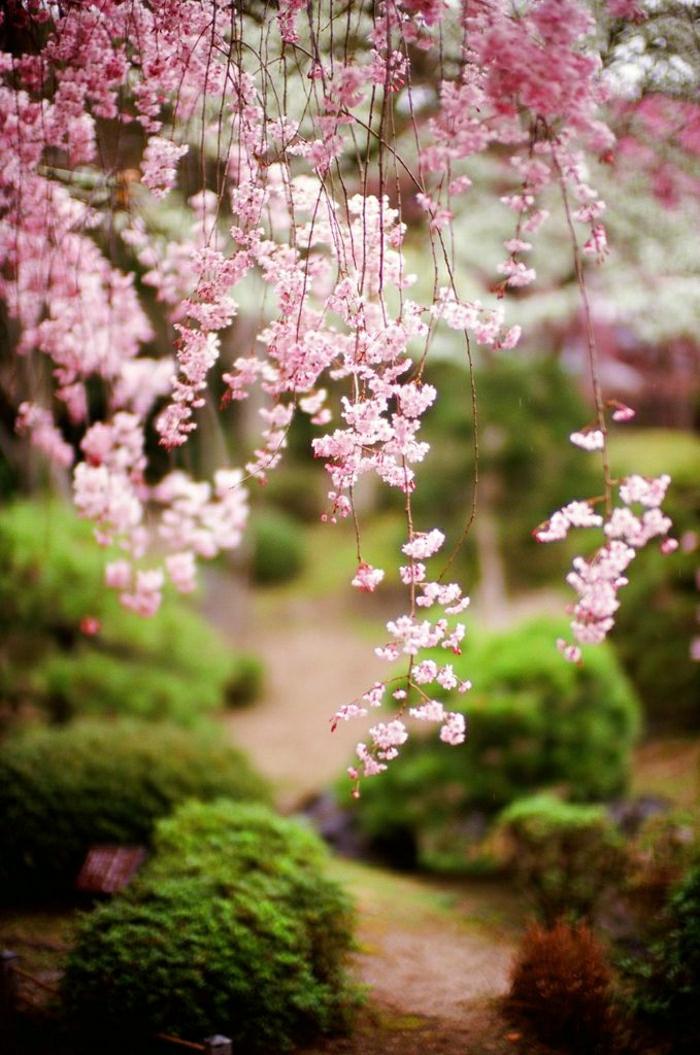 Zen-Garten-japanisch-rosa-Baumblüte