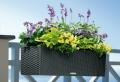 Balkon Blumen für eine schöne Außengestaltung!