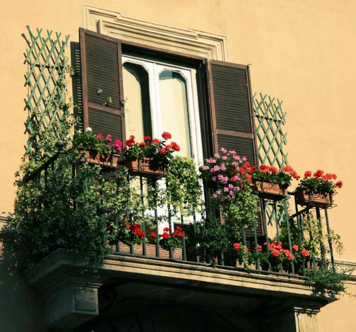 balkon-blumen-interessante-und-cool