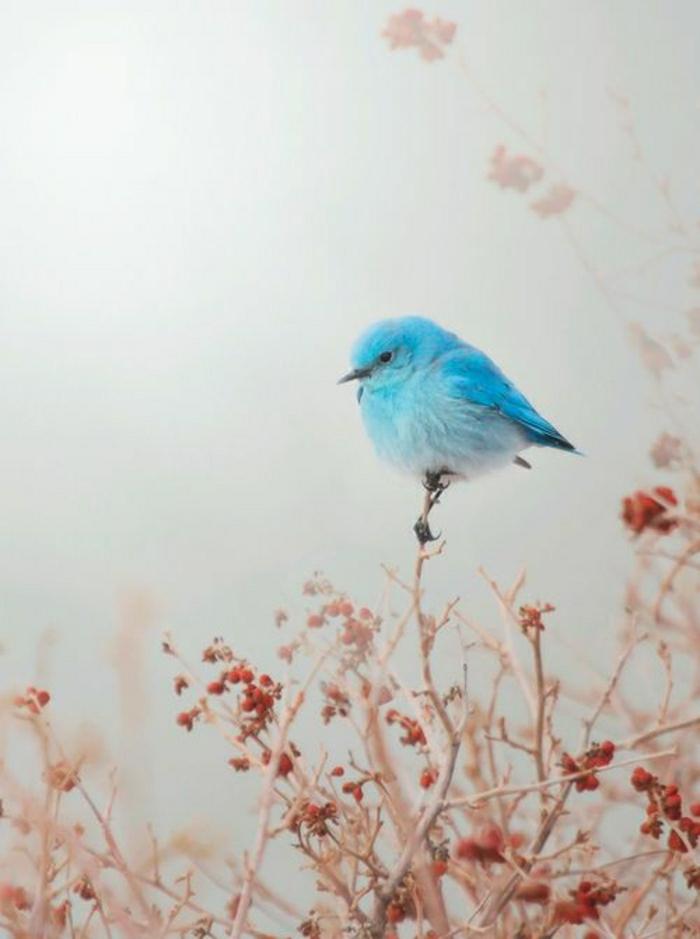 blauer-Vogel-klein-Naturbild
