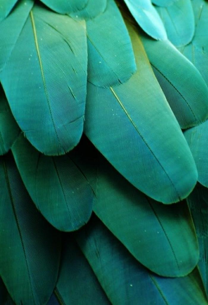 bunte-Federn-Ara-Smaragd-grün